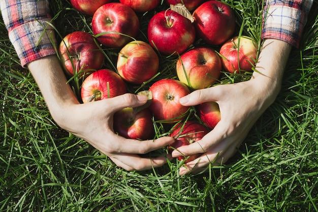 Jemand holt frische äpfel aus dem gras