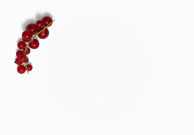 Johannisbeerstrauchfrüchte isoliert