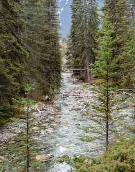 Johnston canyon in nationalpark banff, alberta, kanada
