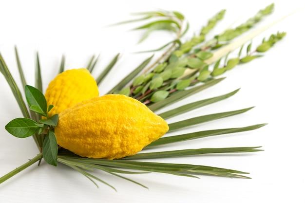 Jüdischer feiertag von sukkot. traditionelle symbole (die vier arten): etrog (zitrone), lulav (palmzweig), hadas (myrte), arava (weide)