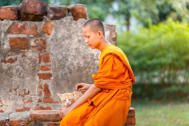 Junge anfängermönche, die katze im alten tempel an der ayutthaya-provinz, thailand spielen