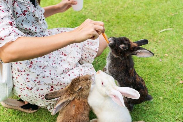 Junge asiatische frau, die ein kaninchen mit einer karotte auf grünem rasen füttert.