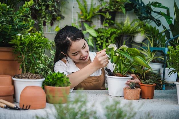 Junge asiatische gärtnerin, die schürze mit schaufel trägt, um zimmerpflanzen und kakteen zu verpflanzen?