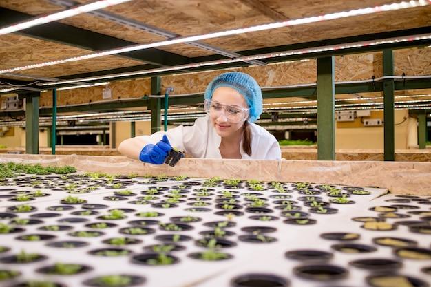 Junge bäuerin wissenschaftlerin analysiert und studiert forschung zu ökologischen, hydroponischen gemüsebeeten die kaukasische frau beobachtet den anbau von biologischem gemüse und naturkost.
