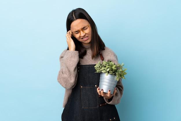 Junge brünette mischrassenfrau, die eine pflanze über blauer wand mit kopfschmerzen hält