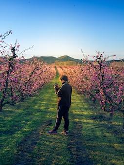 Junge, der die blüte in den pfirsichfeldern bei sonnenuntergang fotografiert. aitone. lerida. spanien