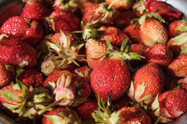 Junge erdbeeren in einer metallschüssel. beeren aus eigenem anbau.