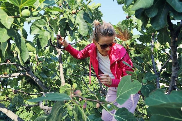Junge frau am feigenbaum hält reife früchte in ihren händen und schaut nach unten, um nach unten zu gehen