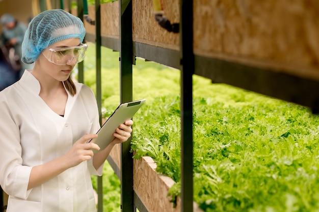 Junge frau biotechnologin, die tablette verwendet, um qualität und menge des gemüses in der hydrokulturfarm zu überprüfen. einsatz von technologie zur verkürzung der arbeitszeit und zur verbesserung des komforts.