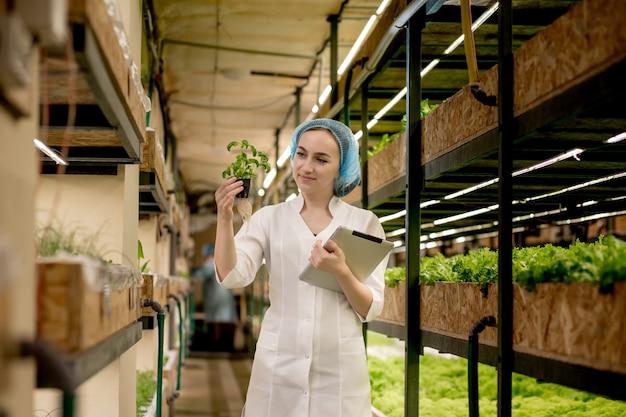 Junge frau biotechnologin, die tablette verwendet, um qualität und menge des gemüses in der hydrokulturfarm zu überprüfen