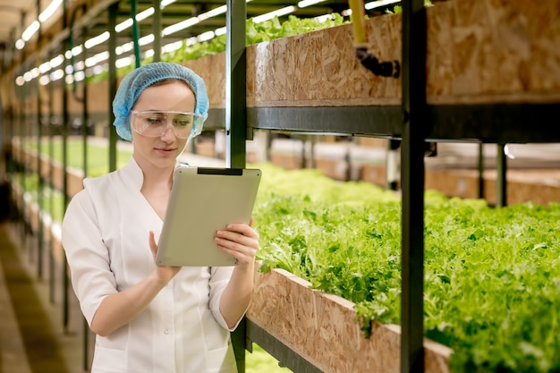 Junge frau biotechnologin, die tablette verwendet, um qualität und menge des gemüses in der hydrokulturfarm zu überprüfen.