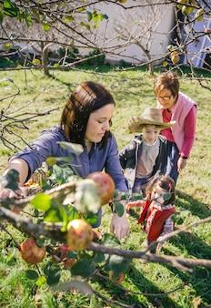 Junge frau, die bei einer ernte mit ihrer familie äpfel vom ast pflücken. natur- und freizeitkonzept.