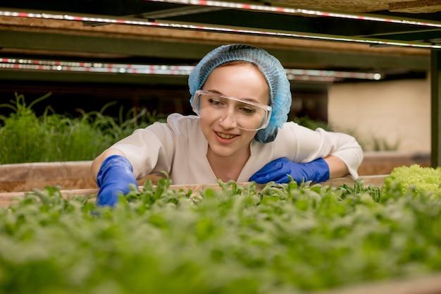 Junge frau, die grünen rucola von ihrer hydrokulturfarm erntet. konzept des anbaus von bio-gemüse und naturkost. hydroponics gemüsefarm.