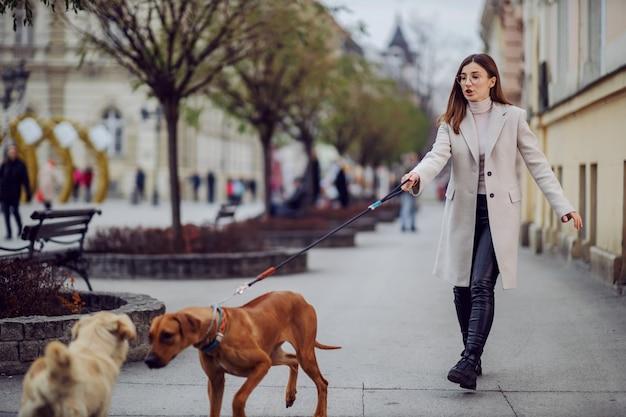 Junge frau, die ihren hund geht. ihr streunender hund spielt mit einem anderen hund