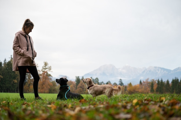 Junge frau, die in der grünen wiese steht, die ihre zwei hunde trainiert, die sie aufmerksam betrachten.