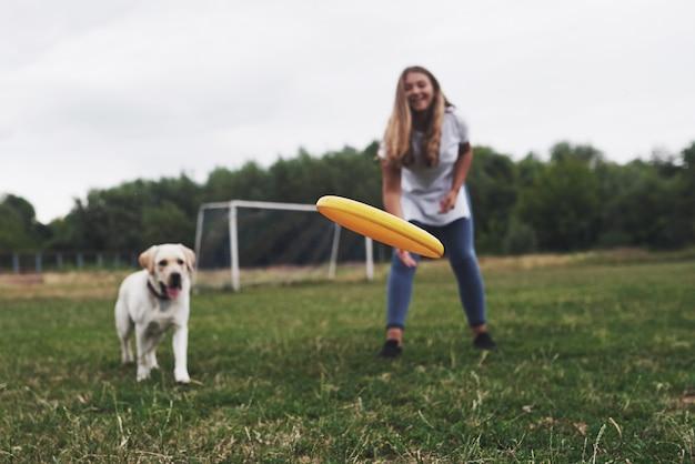 Bilder – Frisbee Dog | Gratis Vektoren, Fotos und PSDs