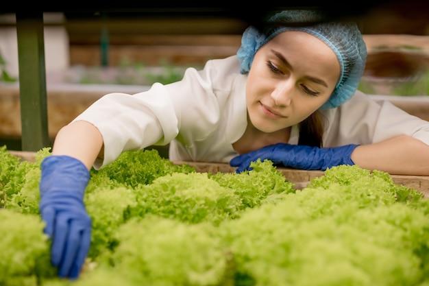 Junge frau, die salat von der hydrokulturfarm erntet. konzept des anbaus von bio-gemüse und naturkost. hydroponik gemüsefarm.