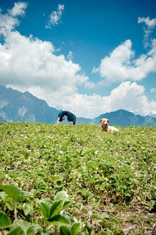 Junge frau, die yogaübungen in einer natürlichen umgebung mit einem hund tut, der auf einem gras sitzt