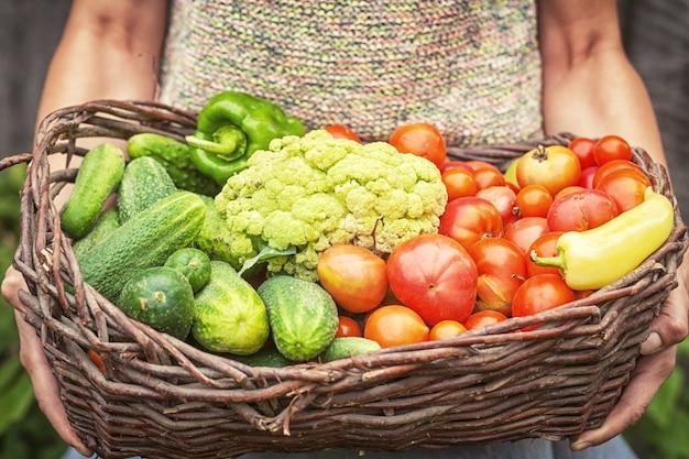 Junge frau hält korb mit roten tomaten, grünen gurken und blumenkohl in ihren händen