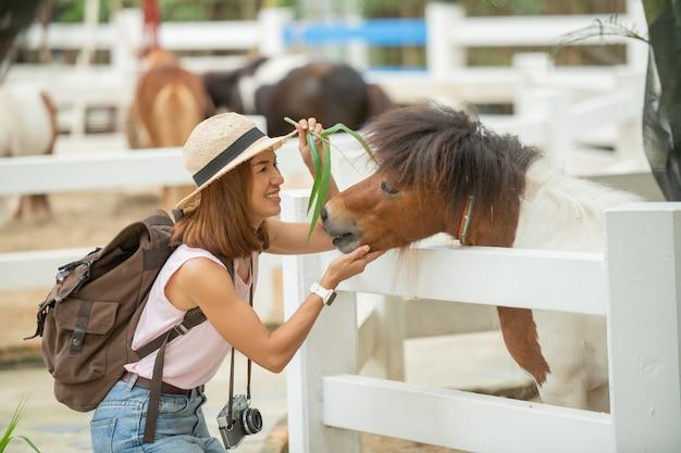 Junge frau in der nähe von ponyfamilie im zoo. asiatische frau, die ponypferd auf der tierfarm füttert.
