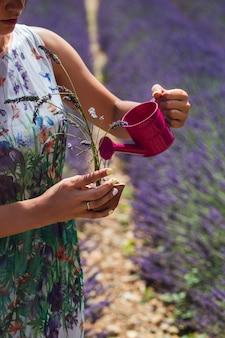 Junge frau in einem kleid steht in der mitte eines lavendelfeldes, das eine gießende topfpflanze gießt