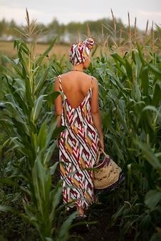 Junge frau in einem traditionskleid, das maisernte mit korb in einer hand pflückt