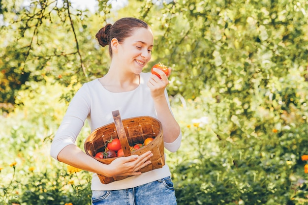 Junge frau landarbeiter hält korb, der frische reife organische tomaten im garten pflückt