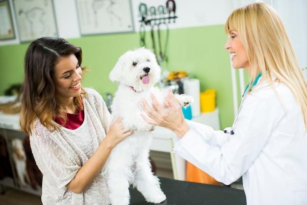 Junge frau mit einem hund am tierarzt