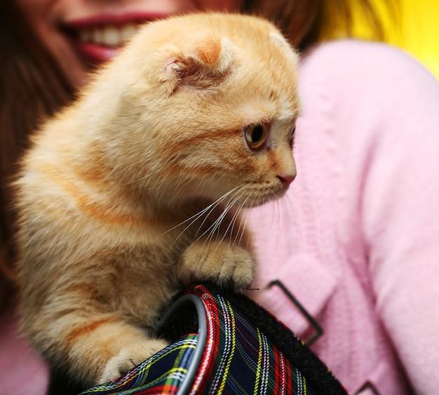 Junge frau mit rotem england-kätzchen mit hängeohren