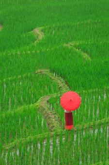 Junge frau mit rotem regenschirm, der in grünen reisterrassen entspannt
