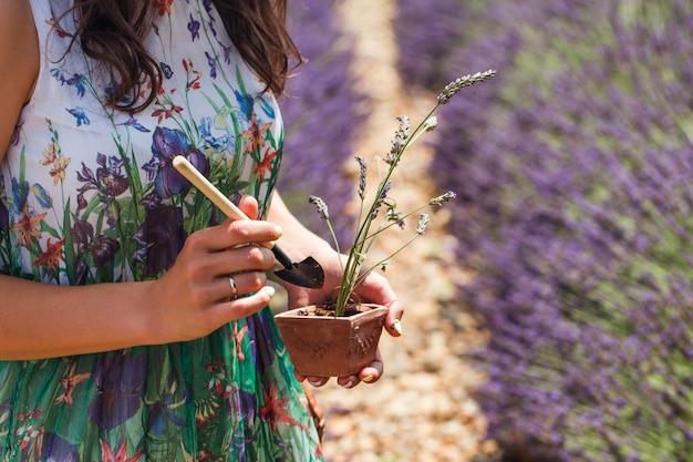 Junge frau steht in der mitte eines lavendels und kümmert sich um eine pflanze in einem topf