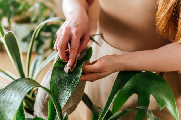 Junge frau wäscht die blätter von zimmerpflanzen hautnah