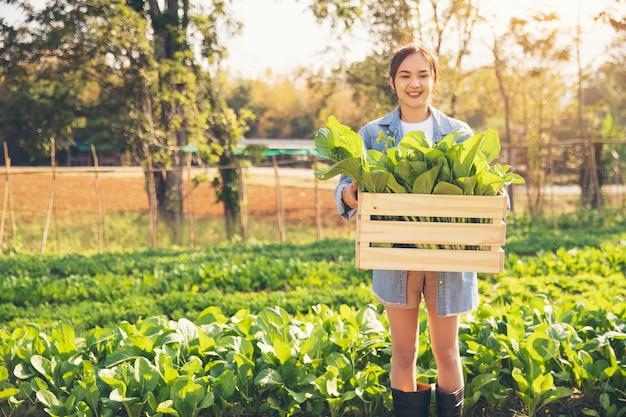 Junge frauen von bio-gärtnern pflücken gemüse in holzkisten, um es den kunden am morgen zu liefern.
