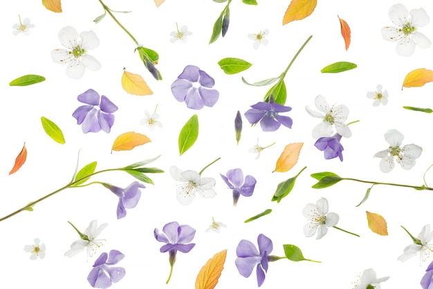 Junge frische grüne blätter, immergrün und kirschbaumblumen. schöner frühlingssaisonhintergrund.
