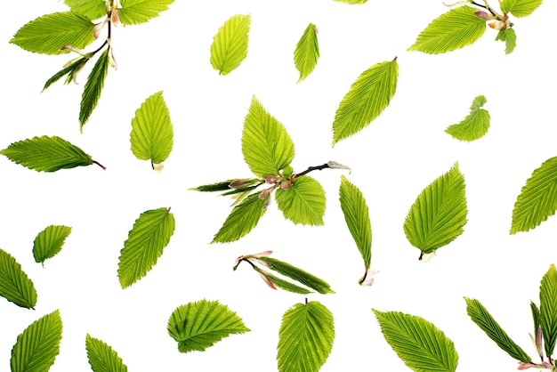 Junge frische grüne blätter. schöner frühlingssaisonhintergrund.