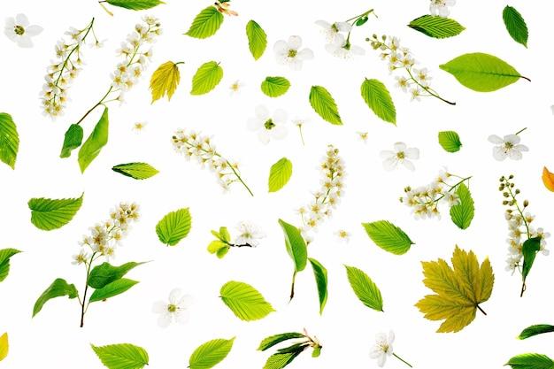 Junge frische grüne blätter und vogelkirschbaumblumen. schöner frühlingssaisonhintergrund.