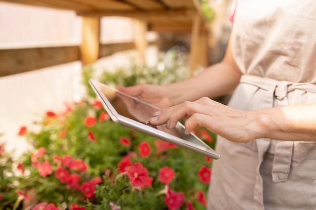 Junge gärtnerin in der schürze, die digitales tablett verwendet, um informationen über neue arten von blumen im netz während der arbeit im gewächshaus zu finden