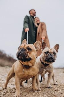 Junge gehende paare ihre französischen bulldoggen im park