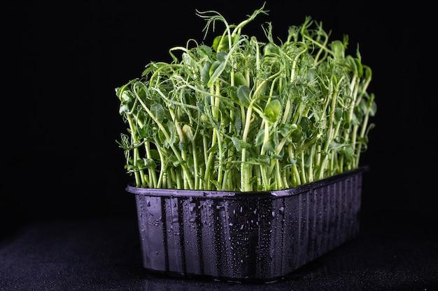 Junge gemüseerbsensprossen, die in einer plastikbox gewachsen sind. veganes und gesundes ernährungskonzept.