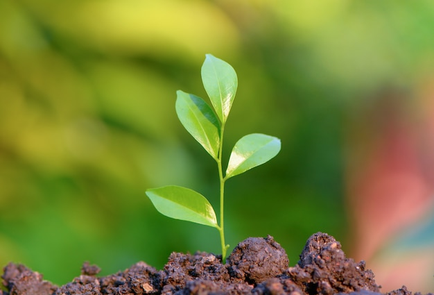 Junge grüne blätter keimen, wachsen auf