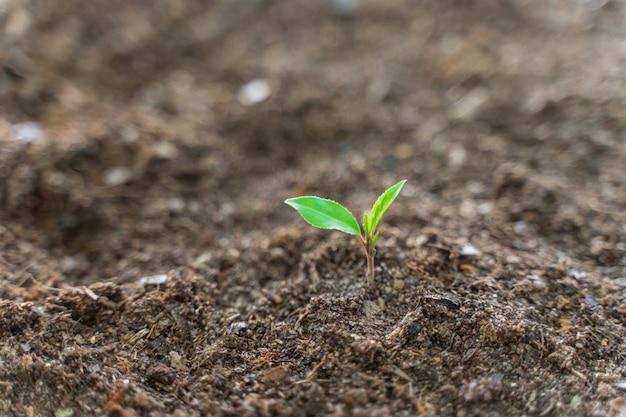 Junge grüne pflanze, die auf einem garten mit sonnenlicht wächst