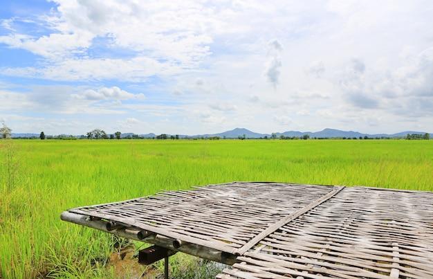 Junge grüne reisfelder der bambusstreu und landschaftsansicht mit himmel und bergen im hintergrund