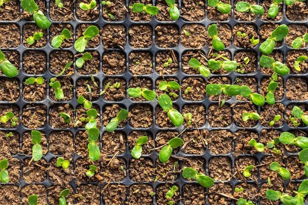 Junge grünpflanze im plastik für das pflanzen auf holztisch