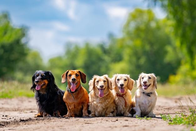 Junge hunde posieren. süße hündchen oder haustiere sehen auf naturhintergrund glücklich aus.