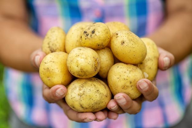 Junge kartoffeln in den händen der landwirtin