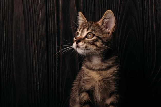 Junge katze auf einem hölzernen dunklen hintergrund