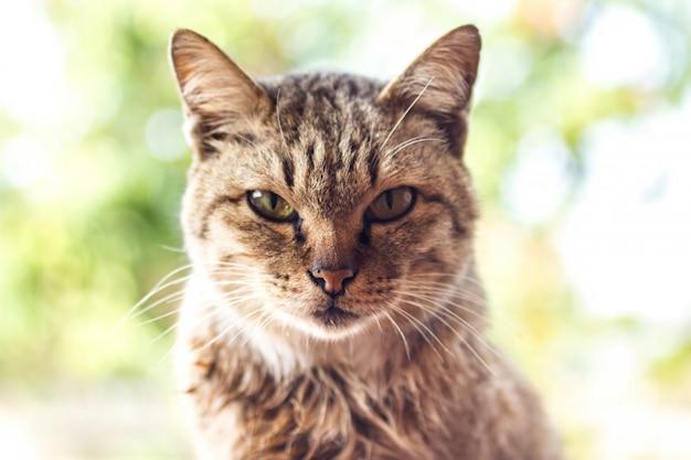 Junge katze thai machen groß mit einem tiger