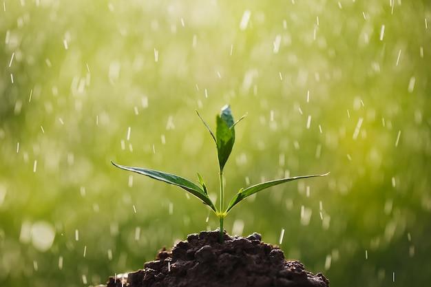 Junge kräuterpflanze andrographis paniculata wächst auf grünem hintergrund