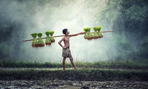 Junge landwirte bauen reis in der regenzeit an.