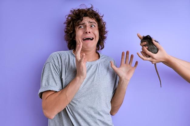 Junge männliche schreie fürchten dekorative ratte isoliert über lila hintergrund, mann leidet unter musophobie